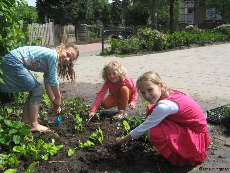 20 mei 09 1-jarigen planten